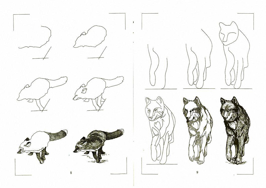 рисунок хищника животного могут самостоятельно регулировать
